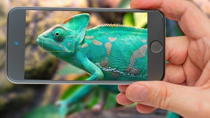 3tipy pro udržitelný byznys a důvod, proč se inspirovat chameleonem ikoblihou