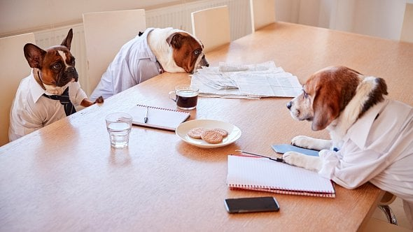 Patří zvířecí mazlíčci do práce? Co si rozmyslet dřív, než benefit zavedete?