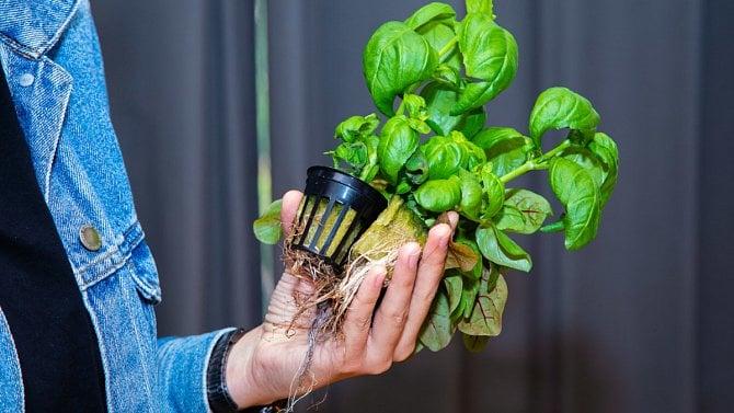 [článek] Továrna na čerstvé bylinky: rostou bez hlíny jen pod dozorem počítače