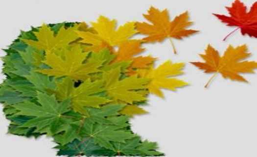 Péče o osoby s Alzheimerovou chorobou a ostatními typy demence, odborné přednášky i poradenství
