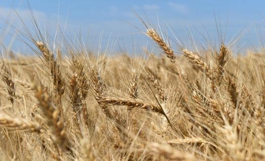 Rostlinná a živočišná výroba, produkce mléka, výkrm skotu
