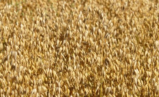Rostlinná a živočišná výroba se zaměřením na pěstování obilovin, chov skotu a produkci mléka
