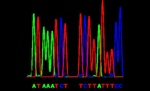 Sekvenace DNA - klasická na kapiláře i NGS sekvenace nové generace