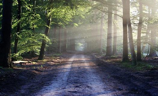 Lesní hospodářství, výkup a prodej dřevní hmoty