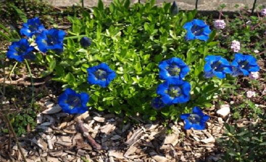 Zahradní sortiment – prodej okrasných květin a dřevin