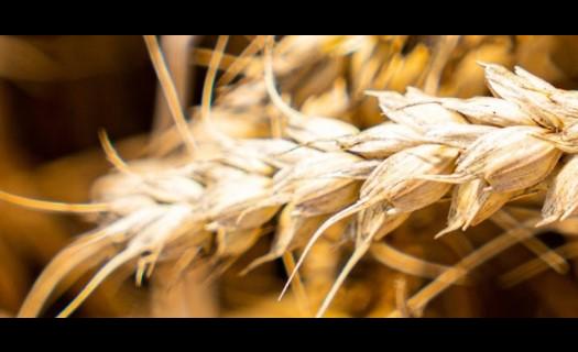 Farma Holešov, rostlinná a živočišná výroba, obiloviny, luštěniny a olejnatá semena