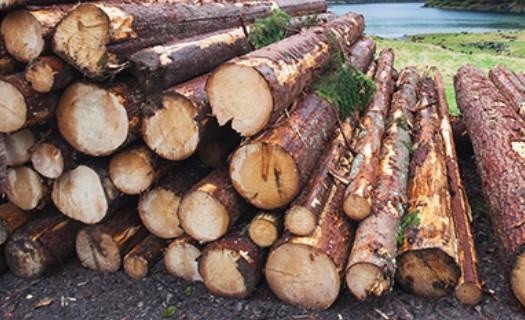 Lesnická činnost, těžba dřeva Šumperk, manipulace se dřevem pomocí vyvažovací soupravy