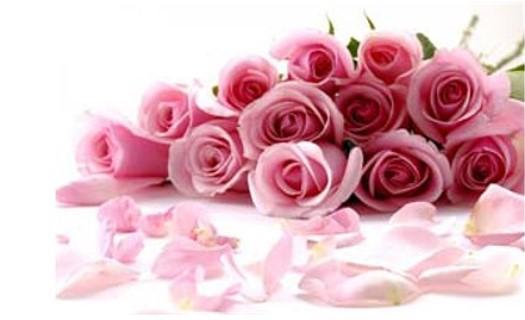 Rozvozy květin a doplňků Brno, dovoz květin pro květinářství, floristiku a obchodní řetězce
