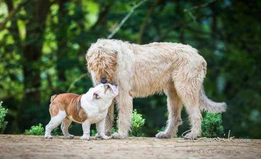 Veterinární klinika Semily, komplexní péče, operační zákroky, hospitalizace zvířat