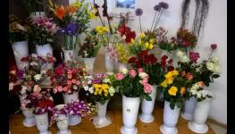 Květinářství, řezané květiny a vazba květin -  čerstvé rostlinky a profesionální služby