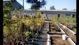 Kvalitní zahradnické služby - realizace zahrad na míru