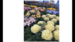 Zahradní chemie Opava - substráty, hnojiva, prostředky proti mechům v trávníku