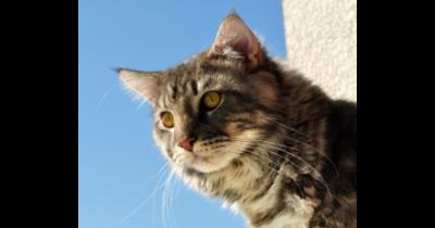 Kastrace, kleštění kocourů a sterilizace koček - řešení nežádoucího množení