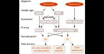 Sekvenace nové generace - NGS sekvenace - nejrozšířenější způsob analyzování biologického materiálu