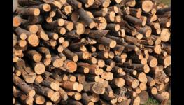 Prodej palivového dříví - kvalitní palivové dřevo na topení