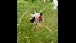 Využíjte dotace na střešní zahrady - návrhy, realizace