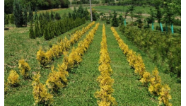 Pěstovat lesní sazenice a stromky za účelem prodeje má smysl