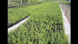 Pěstujeme lesní sazenice pro další sadbu s radostí a vstřícností