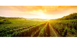 Prodej vinařských potřeb, produktů k ošetření hroznů, nápojová technika