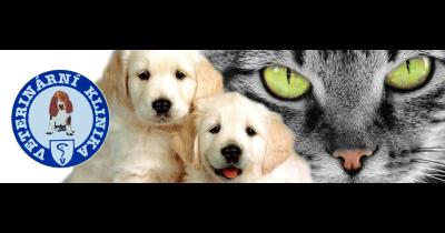 Pojištění veterinární léčby psa