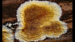 Přípravky značky BOCHEMIT® ochrání dřevo proti dřevokazným houbám, hmyzu a plísním