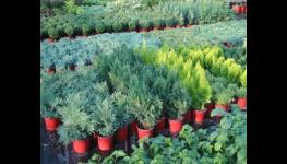 Trvalky trávy letničky balkonové rostliny zahradnictví Kolín Velim