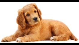 Operace žaludku zvířat, laparoskopická gastropexe - moderně vybavená veterina