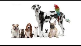 Krmiva a chovatelské potřeby pro kočky, psy, hlodavce, ptáky
