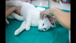 Sedativa pro psy, zklidňující léky, ošetření psů, veterinární klinika