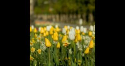 Mezinárodní zahradnická výstava a veletrh Flora, jarní etapa