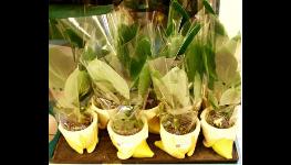 Pro bezpečný převoz květin a  jejich skladování jsou tady kónusové sáčky na květiny