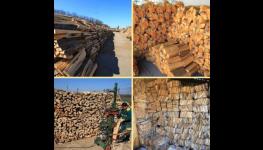Palivové a krbové dřevo na prodej ve velkoobchodu Prodex, okres Znojmo