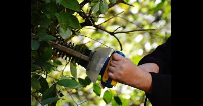 Profesionální péči o zeleň a zahradu zajistí společnost Král – Zahradnické práce