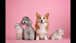 Veterinární ordinace Slovanka – profesionální ošetření malých i velkých zvířat