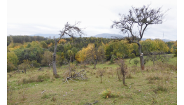 Výsadba a obnova ovocných sadů - projekce, projekty pro dotace