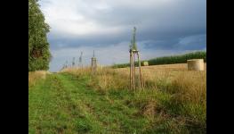 Projekty pro obnovu krajiny, výsadbu zeleně, dřevin