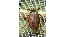 Dodávka a montáž okenních a dveřních sítí proti hmyzu  – Zlínský kraj