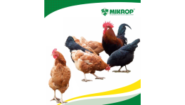 Prodej krmné směsi pro všechny druhy drůbeže, slepice, krůty, kuřata, brojlery