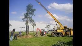S kácením a přesazováním vzrostlých stromů pomůže firma ZAHRADY HASTÍK