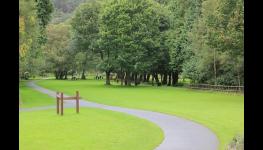 Arboristické služby – péče o stromy a zeleň, sadové a vegetační úpravy