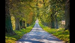 Hodnocení stavu stromů, oceňování stromů, plán péče, pasport a inventarizace zeleně
