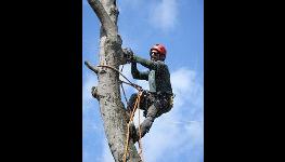 Rizikové kácení stromů pomocí lezecké techniky nebo z plošiny, ořezy