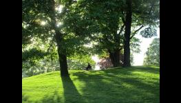 Oceňování dřevin– stanovení hodnoty stromů dle metodiky AOPK ČR