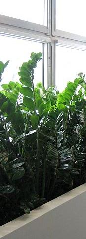 Pěstování rostlin v interiéru Průhonice