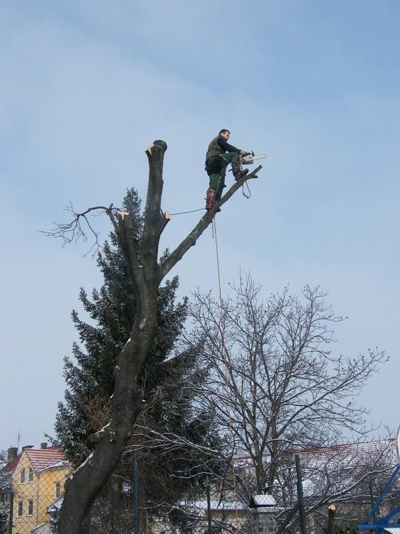 rizikové kácení stromů s nutností spouštění větví a částí kmene