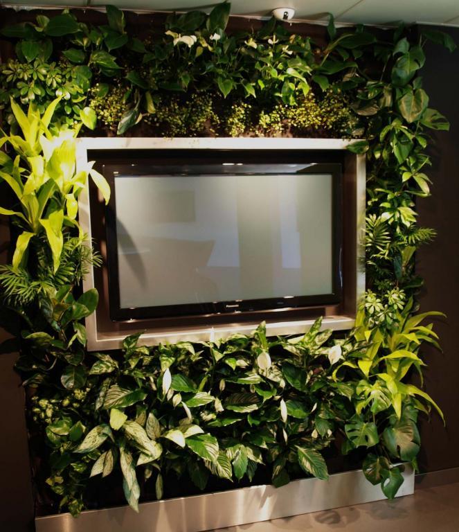 Zelená stěna greenwall vhodná do jakéhokoliv prostoru