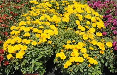 Široký výběr květin