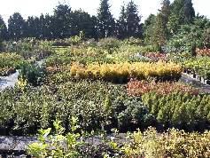 Zahradnictví prodej ovocných stromků