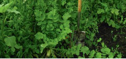 Přerušení osevních postupů a regenerace půdy s TerraLife směsí