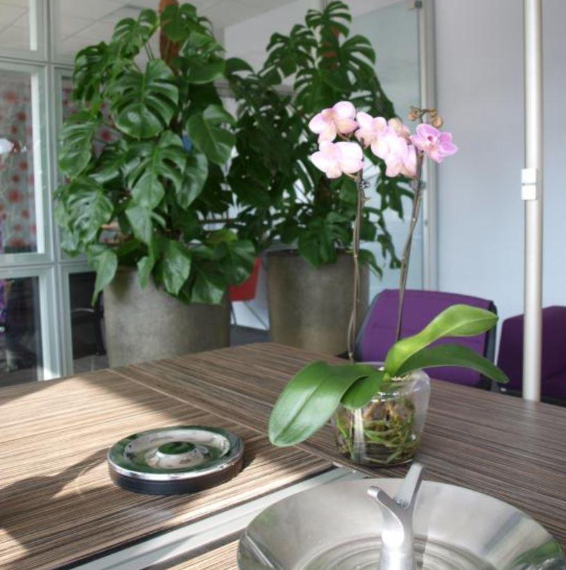Návrh květinové výzdoby interiéru Praha – pro zkrášlení každého prostoru